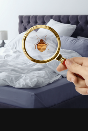 Image for Bed Bugs, Ants, and More Services